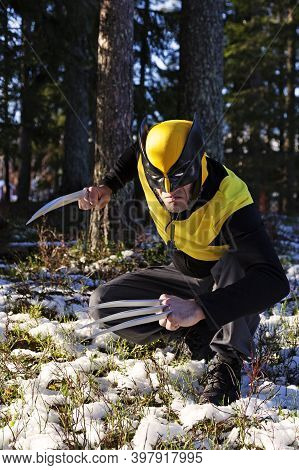 Umea, Norrland Sweden - October 23, 2020: The Wolverine Is Huddled In The Woods