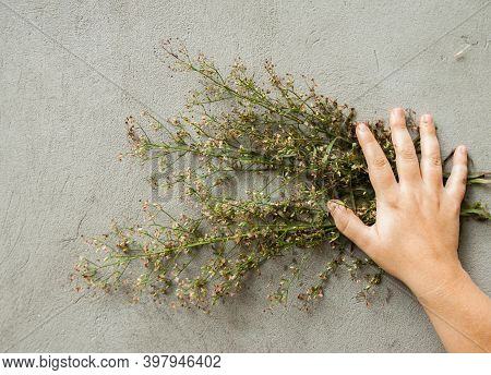 A Woman Hand Holds Dried Wildflowers Bouquet Against A Grey Cement Wall. Copyspace