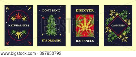 Advertising Leaflet Designs With Marihuana Plant. Colorful Brochure With Cannabis Leaves On Dark Bac