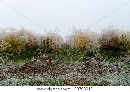 morning hoarfrost in autumn