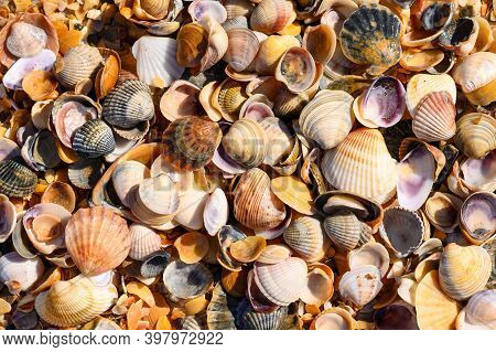 Many Multi-colored Seashells On The Black Sea Coast. Background From Seashells. Focusing In The Cent