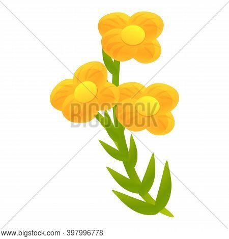 Canola Flower Plant Icon. Cartoon Of Canola Flower Plant Vector Icon For Web Design Isolated On Whit