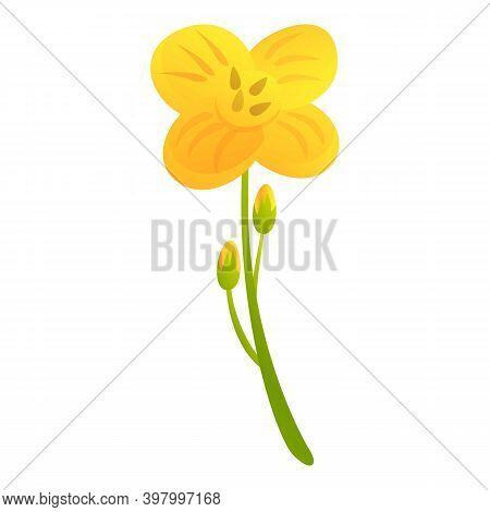 Canola Bio Eco Plant Icon. Cartoon Of Canola Bio Eco Plant Vector Icon For Web Design Isolated On Wh
