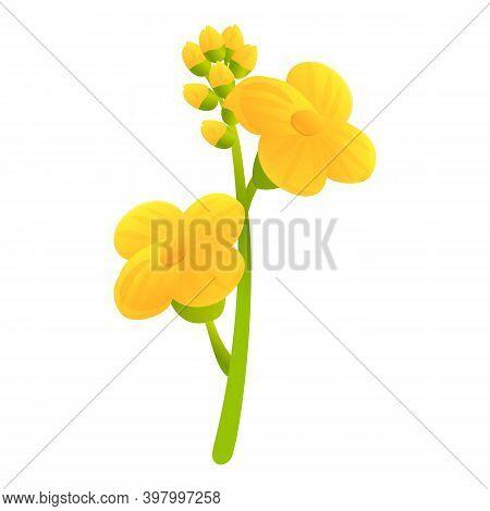 Canola Bio Herb Flower Icon. Cartoon Of Canola Bio Herb Flower Vector Icon For Web Design Isolated O