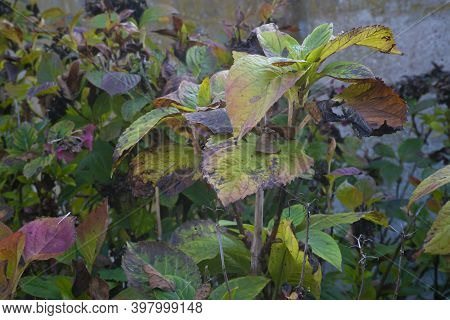 Withered Leaves In Autumn 3