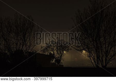 Bare Branches With Fog At Night