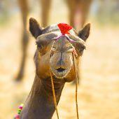 Camel animal adventure background poster