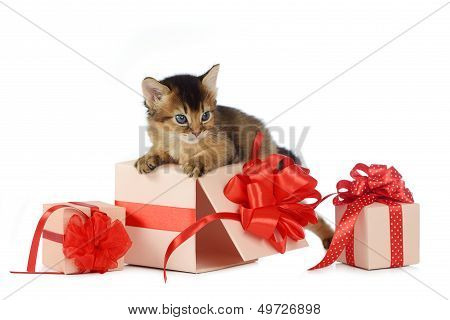 Cute Somali Kitten On A Present Box Isolated On White Background