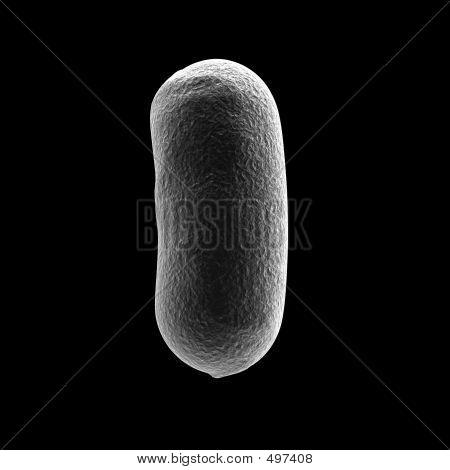 Bacillus_bacteria2