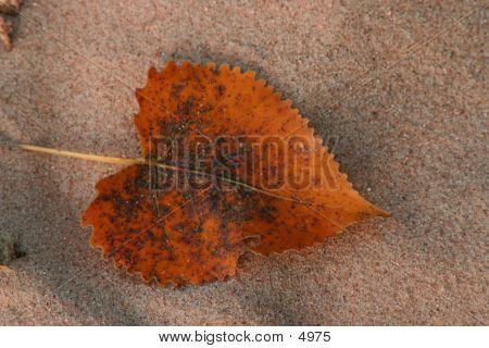Sand And Leaf