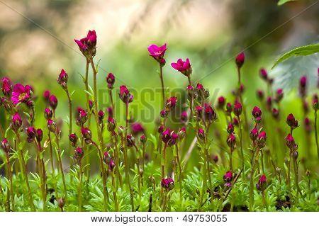 Red Flowers Macro