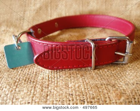 Dog Collar On Burlap