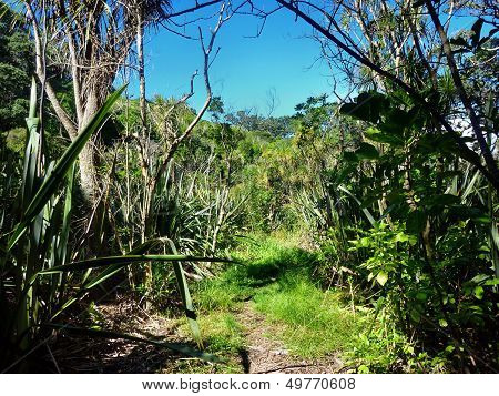 Hiking Track Through Native Bushland