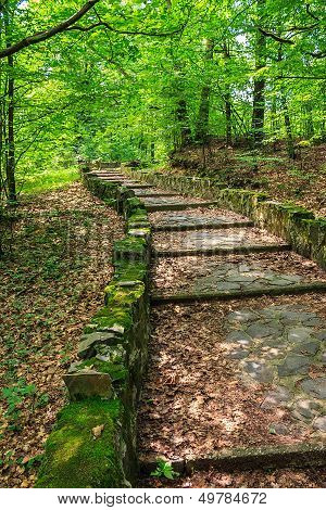 Winding Stone Steps With Foliage Vertical