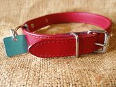 red dog collar with identification tag poster