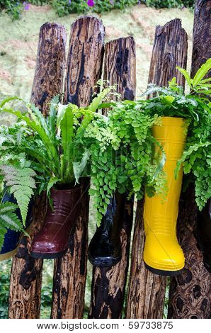 Plant In Colorful Boots On Wood