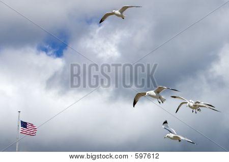 All American Gulls