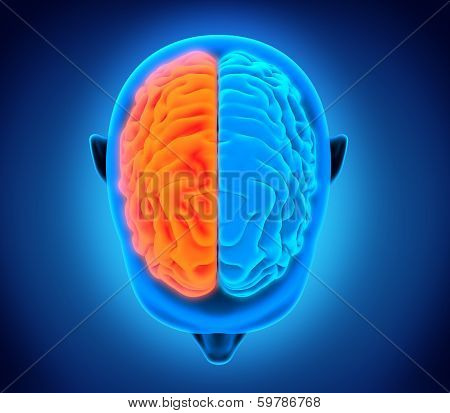 Left and Right Human Brain isolated on white background. 3D render poster