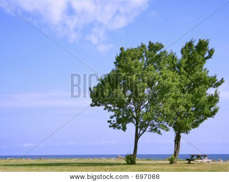 Two Trees Picnic