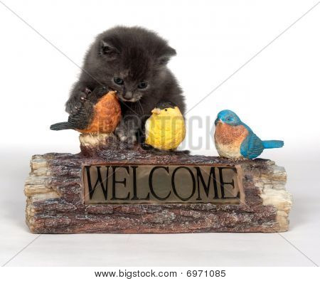 Kitten And Decorative Welcome Sign