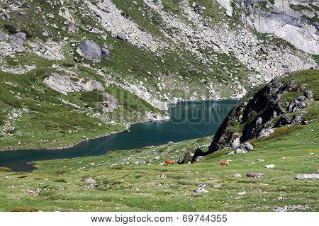 Part Of The Twin (bliznaka) Lake And Horses