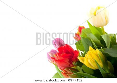 Colorful Bouquet Of Tulips