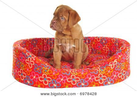 Puppy Sitting In Its Cot