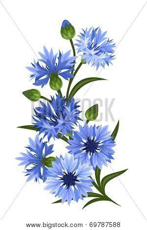 Branch of blue cornflowers. Vector illustration.