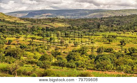 Beautiful Landscape Of Harar