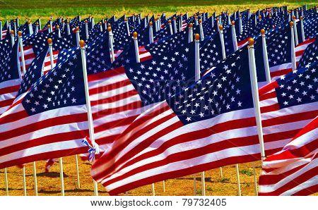 Flags In A Field.