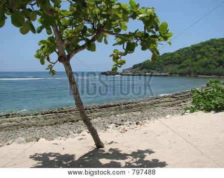 tree on beach in labadee