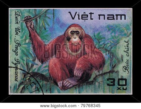 Post Stamp. Pongo Pygmaeus