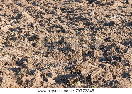 Field Arable