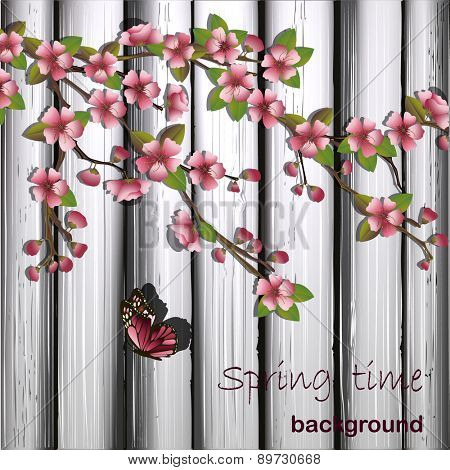 Japanese cherry tree and wooden background.Vector illustration