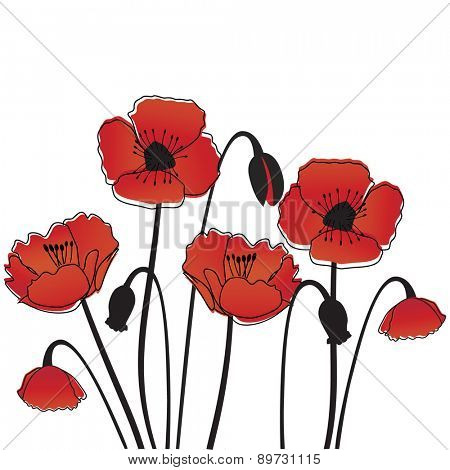 Poppy background. Vector