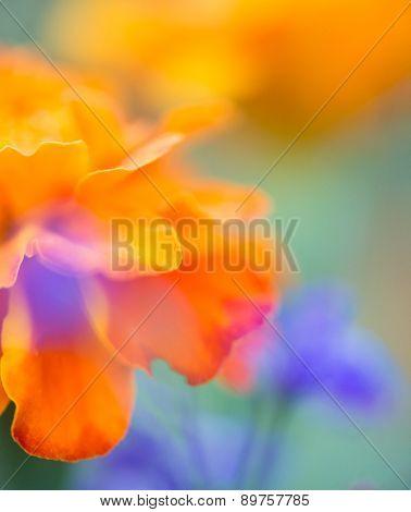 Warm Floral Blur