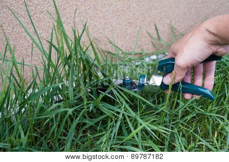 cutting grass with shears
