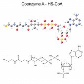 Structural chemical formula and model of Coenzyme-A - HS-CoA, 2d and 3d illustration, vector, eps 8 poster