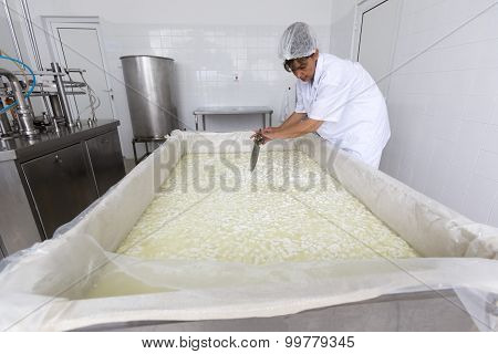 Cheese Worker In A Diary Creamery