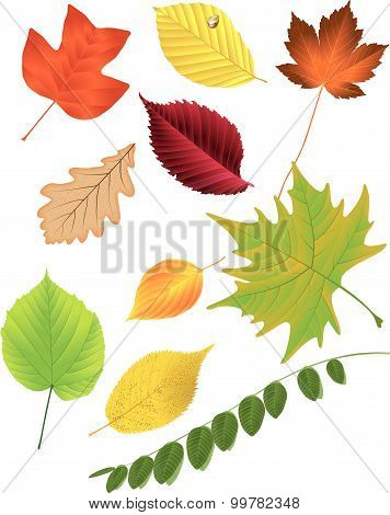 Autumn leaf collection, vector illustration