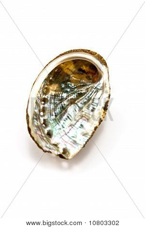 Abalone Shell Isolated On White