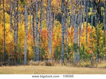 Fall On The Mesa