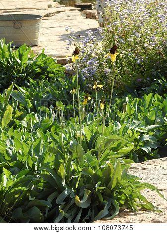 Tall Flowers in Garden