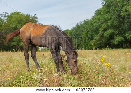 Cute foal on a summer pasture