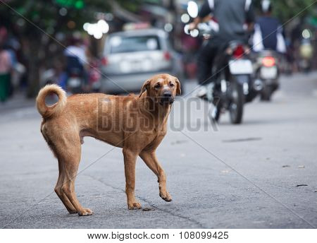 Lost dog standing on a crowded street