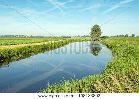 Tree And Contrails Reflected In A Small Stream