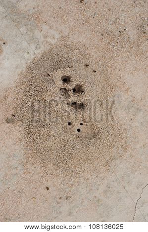 Ant Colony Designs And Sand Sculpture Desert Sands And Global Warming
