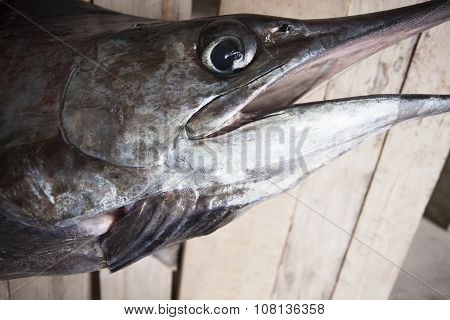Headshot Of A Marlin Or Sailfish