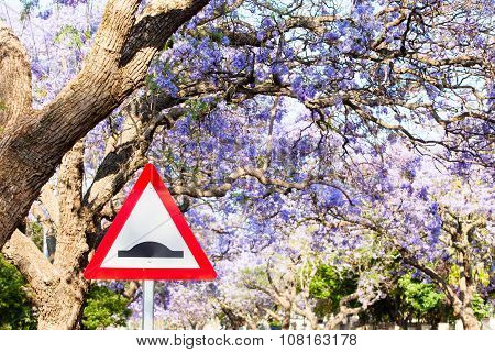 Triangular Road Sign Warning Of Speed Bump Against Purple Jacaranda Tree Background