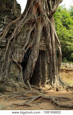 Old tree on gate